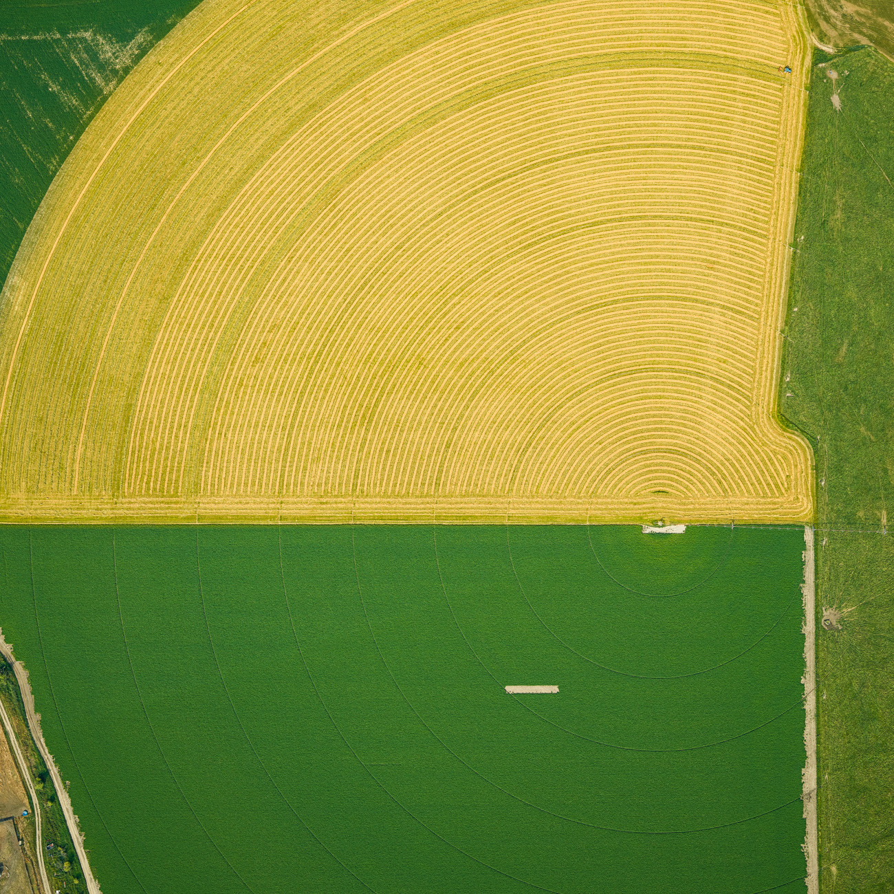 yellow farmland