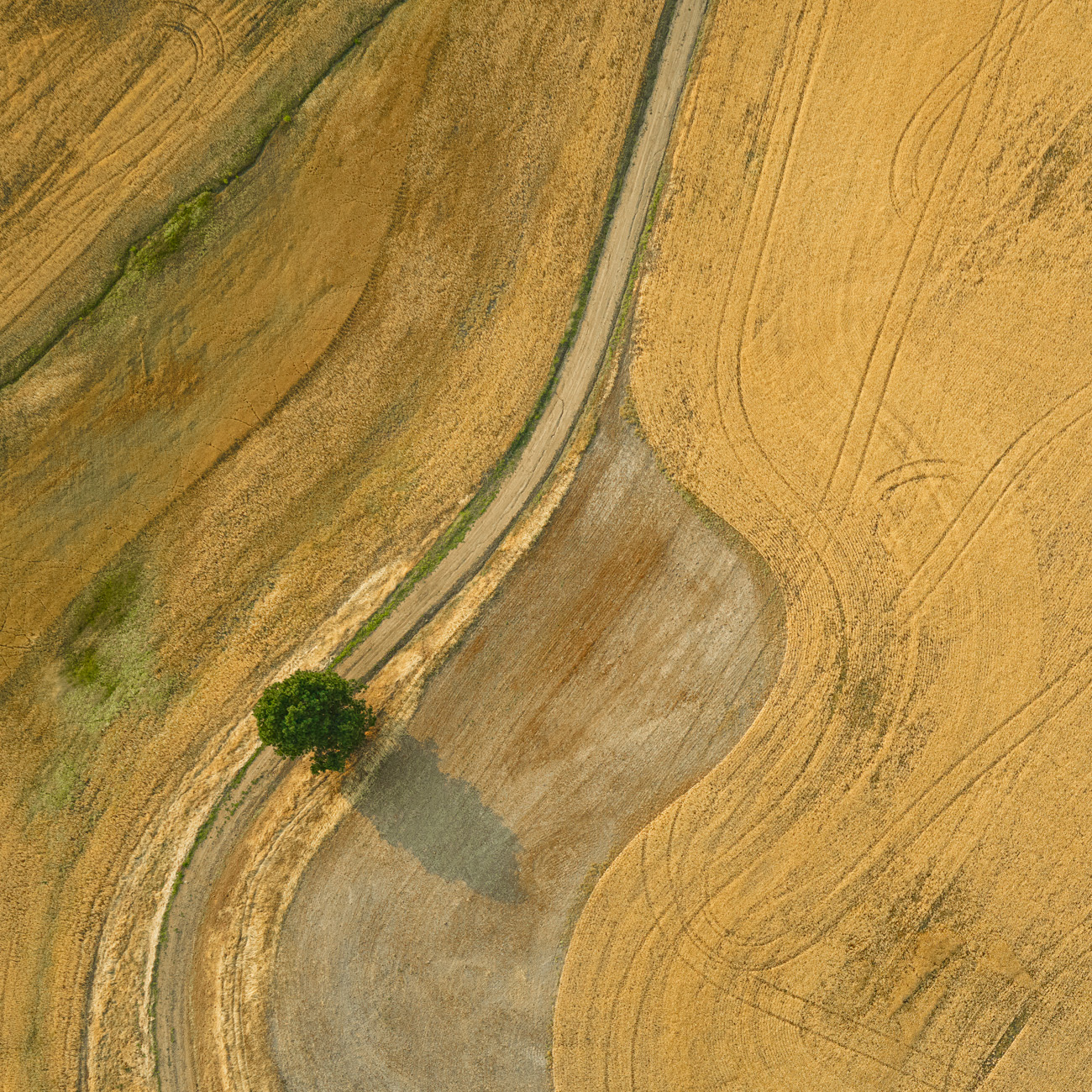 Palouse Tree Aerial
