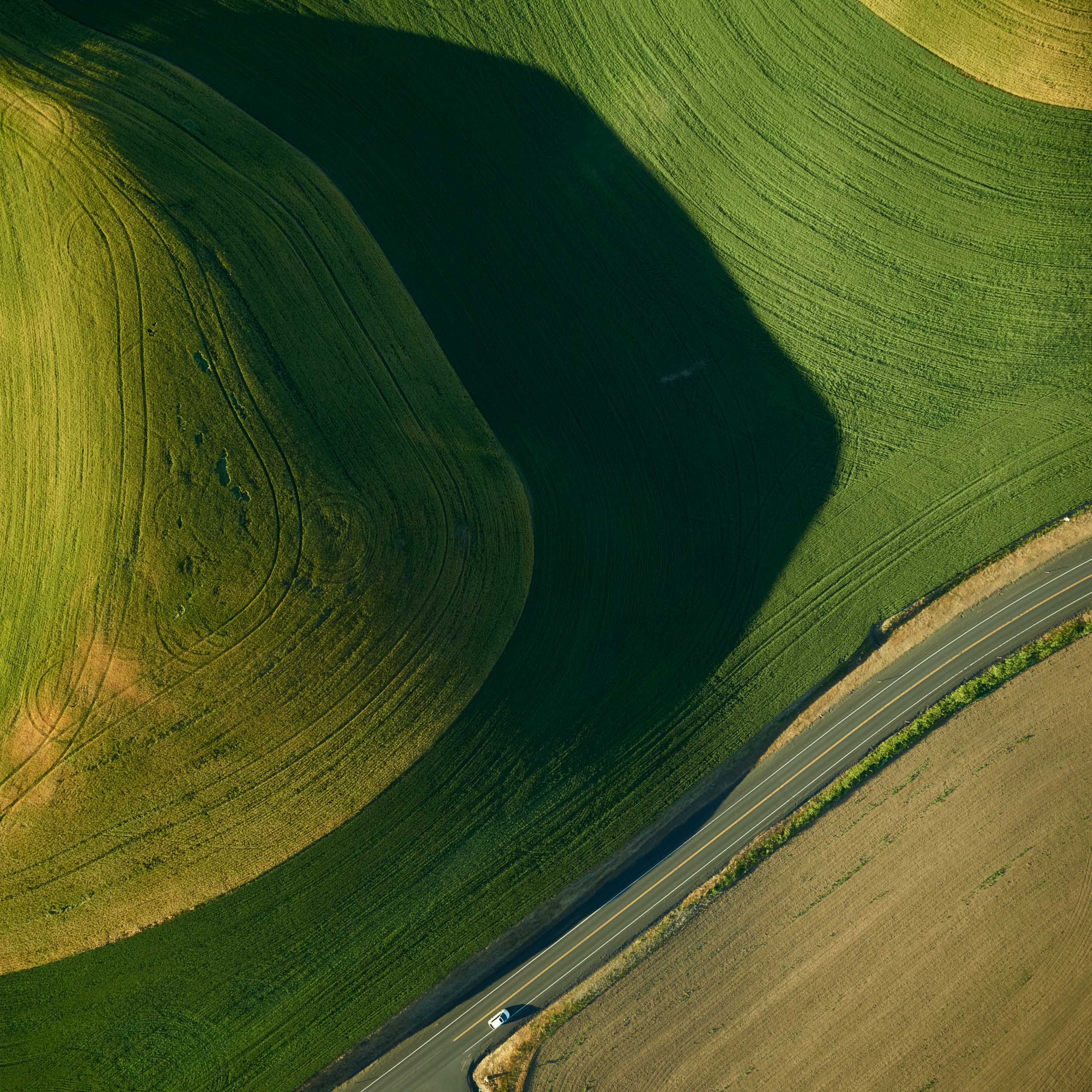 Palouse Hill